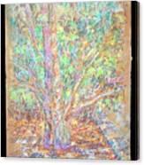 Lr I 1 4 5 The Gift Canvas Print