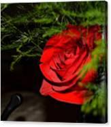 Lucius Red Rose Canvas Print