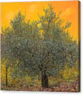 L'ulivo Tra Le Vigne Canvas Print