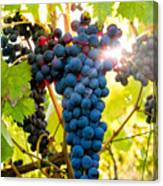 Luminous Grapes Canvas Print
