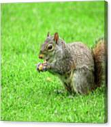 Lunchtime In The Park Canvas Print
