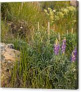Lupine Among The Weeds  Canvas Print
