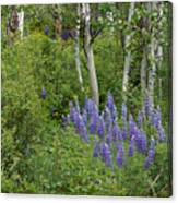 Lupine And Aspens Canvas Print