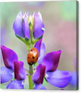 Lupine And Friends Canvas Print