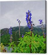 Lupine And Mountains Canvas Print