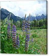 Lupine In The Alpine Canvas Print