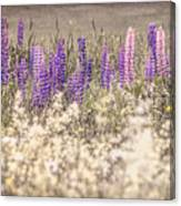 Lupine Remembered Canvas Print