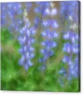 Lupine Soft Focus Canvas Print