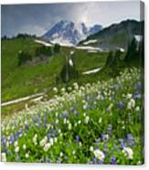 Lupine Storm Canvas Print