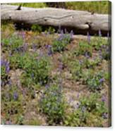 Lupines And A Log Canvas Print