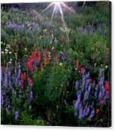 Lupines And Sun Canvas Print
