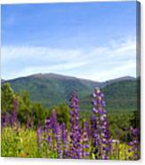 Lupines And The Presidentials Canvas Print