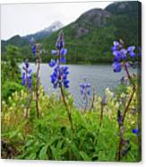 Lupines And Water Canvas Print