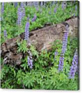 Lupines And Windfall Canvas Print