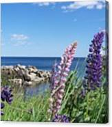 Lupines At Lake Superior Canvas Print