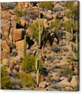 Lush Arizona Desert Landscape Canvas Print