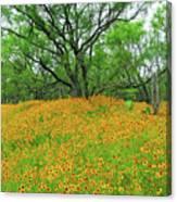Lush Coreopsis Canvas Print