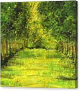 Tropical Trees Theosophical Society Chennai Canvas Print