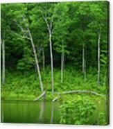 Lush Green Pond Canvas Print