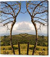 Lush Land Leafless Trees IIi Canvas Print