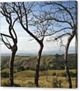 Lush Land Leafless Trees Iv Canvas Print
