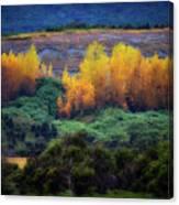 Lush New Zealand Countryside Canvas Print