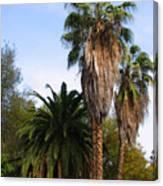 Lush Palms Canvas Print