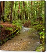 Lush Redwood Forest Canvas Print