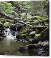 Lush Stream And Canopy Foliage Canvas Print