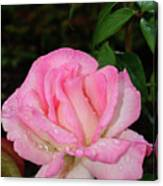 Lustrous Pink Rose Canvas Print