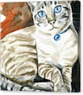 Lynx Point Siamese Cat Painting Canvas Print