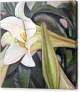 Lys Canvas Print