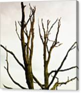 Macabre Leafless Tree Canvas Print
