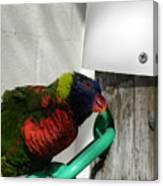 Macaw-1 Canvas Print