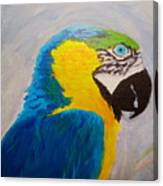 Macaw Head Canvas Print