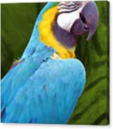 Macaw Canvas Print