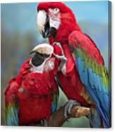 Macaw Love Canvas Print