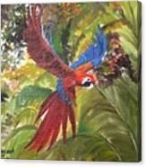 Macaw Parrot 3 Canvas Print