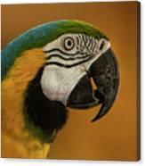 Macaw Portrait Canvas Print