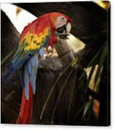 Macaw Tampa Florida Canvas Print