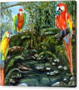 Macaws Canvas Print