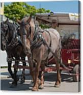 Mackinac Island Horse Carriage Canvas Print