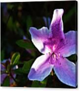 Maclay Garden In Morning Bloom Canvas Print