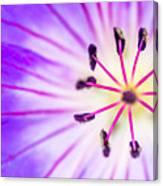 Macro Closeup Of A Purple Flower Stamen Canvas Print