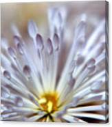 Macro Flower 3 Canvas Print