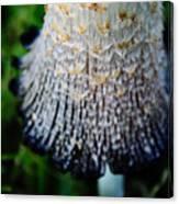 Macro Mushroom Canvas Print