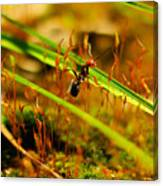 Macro Of An Ant Canvas Print