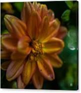 Macro Of Dahlia Flower Canvas Print