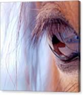 Macro Of Horse Eye Canvas Print