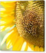 Macro Photography Of Sunflower Canvas Print